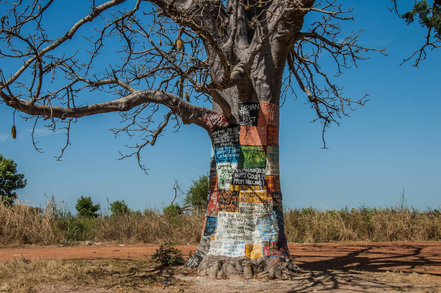 A lone baobab stands alone in the desert. The bark is painted by those that have passed through, highlighting its sentiment and unique impact on guides and natives alike.