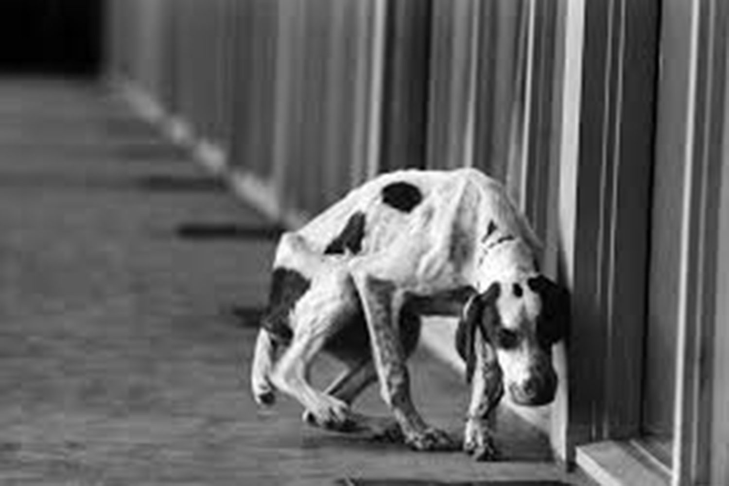 An abandoned dog travels the streets alone. He was left behind by his owners to face the world with no guidance.