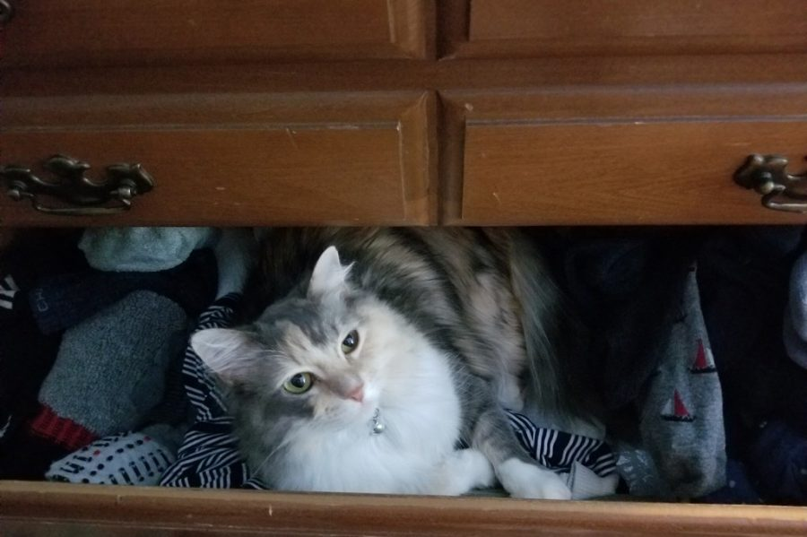 A furry friend in its usual habitat, the local sock drawer. Cats and other pets have very different likes and dislikes, but almost all of them enjoy affection just as much as the one giving the attention
