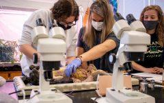 Marissa Seguinot and Angelina Deidrick dissect the cat.